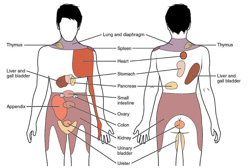 chart showing referred pain